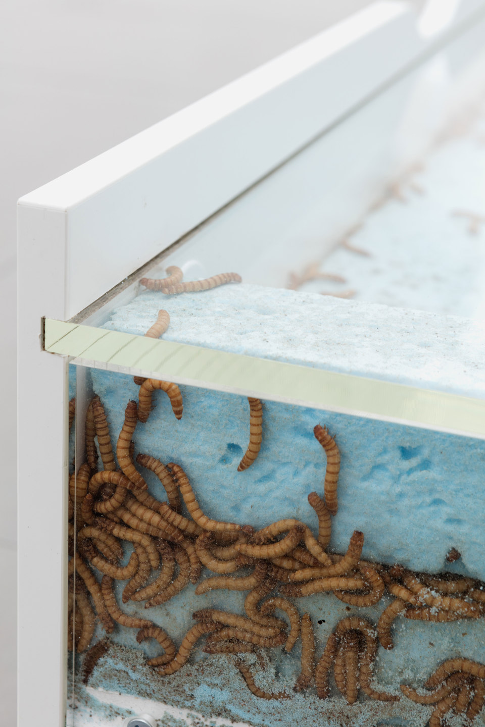Aude Pariset, GREENHOUSES, 'Promession® #1' [detail], Flaxa underbed, perspex, wheels, Styrofoam, giant mealworms, vents, MDF, 90 x 202 x 31cm, 2016, Cell Project Space