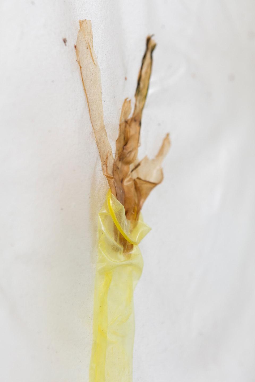 Aude Pariset, GREENHOUSES, 'Flower Maiden (Ecoveg)' [detail], Bioplastic, UV print on bioplastic, laser transfer print, condoms, seaweed, wood, paint, 60 x 90cm, 2016, Cell Project Space