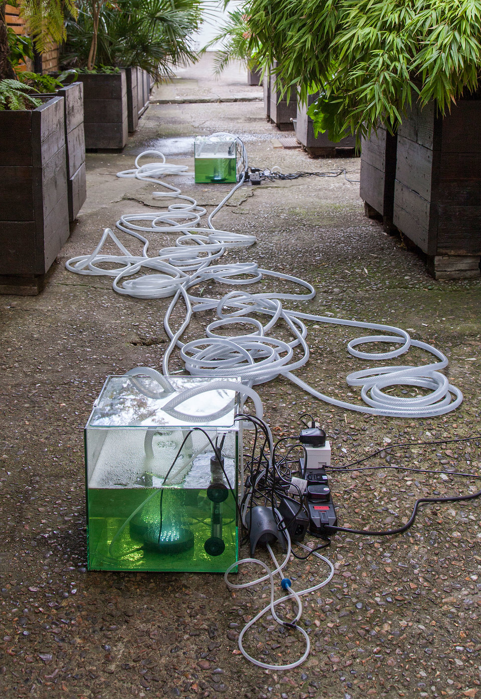 Daniel Keller, Onanet Spiruline 2, 2015, Living Spirulina algae, aqueous nutrient solution,nano cube glass aquariums, power plugs, heaters, air compressors, LED air stones, pumps, tubing, steel, Cell Project Space