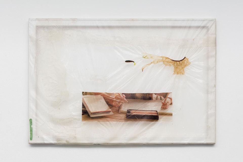 Aude Pariset, GREENHOUSES, 'Leçon de Vie (Bio Qualität)', Bioplastic, UV print on bioplastic, mealworms, Lexomil, wood, paint, 60 x 90cm, 2016, Cell Project Space